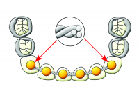 DIRECT BOND AND LINGUAL ATTACHMENTS